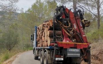 Els pinars bruts, un invent permanent per demanar subvencions