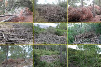 Fer bosc net no existeix, desambiguació de tòpics