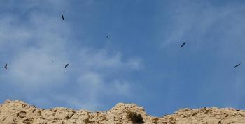 A Mallorca protegir és prohibir
