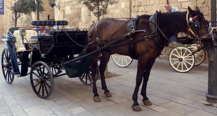 La Policia de Palma es compromet a investigar les denúncies pel mal estat dels cavalls de les galeres