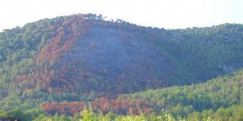 D'incendis, arbres i una lliçó des d'Andalusia