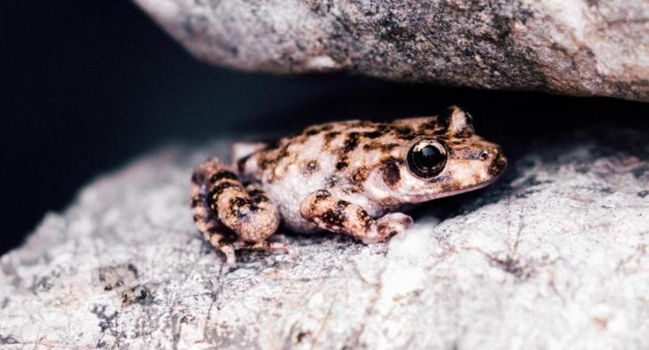 Conservació de la natura: la població de ferreret a Mallorca manté l'estabilitat dels darrers anys