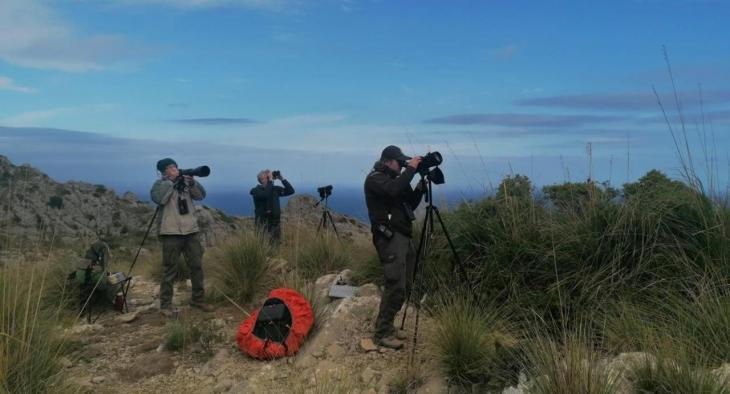 Conservació de la natura: una setantena de voluntaris participa en el nou cens d'exemplars de voltor negre a Mallorca
